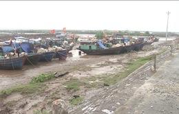 Thái Bình: Hơn 1.000 tàu thuyền đã vào nơi tránh trú bão