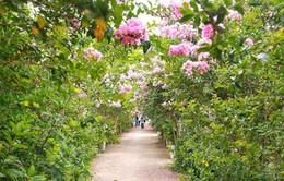 Con đường hoa tường vi đẹp như mơ ở Hà Nội
