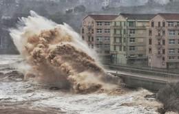 Gia tăng số người thiệt mạng do bão Lekima