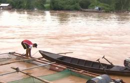 Thiệt hại do lũ dâng cao tại Đồng Nai