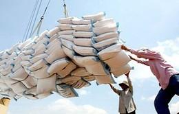 Giá gạo Thái Lan tăng mạnh so với các nước khác ở châu Á