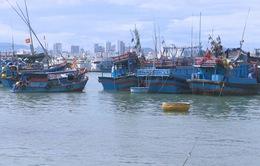 Hàng loạt tàu cá nằm bờ Nam Trung Bộ