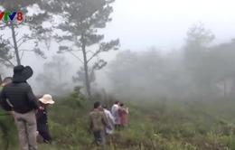 Lâm Đồng: Bắt 11 đối tượng phá rừng phòng hộ Đà Lạt