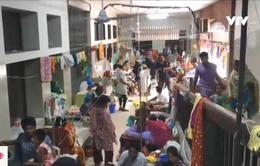 Sri Lanka và Bangladesh vật lộn với dịch sốt xuất huyết