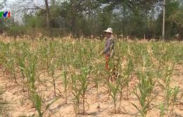Thái Lan triển khai chiến dịch mưa nhân tạo chống hạn