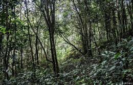 Thái Lan thí điểm mô hình trồng rừng mới hiệu quả hơn