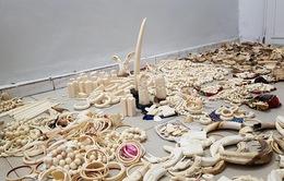 Kenya liên tục xử phạt du khách mang trang sức ngà voi