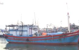 Quảng Nam khó khăn truy xuất nguồn gốc hải sản