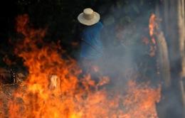 """[Infographic] """"Bà hỏa"""" thiêu đốt rừng Amazon: Lá phổi xanh của Trái đất kêu cứu"""