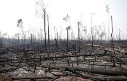 Các nước G7 sẽ hỗ trợ giải quyết cháy rừng Amazon