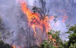 Cháy rừng Phú Yên: Đám cháy vẫn chưa thể dập tắt