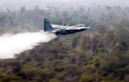 Lãnh đạo Nhóm G7 nhất trí chi khẩn cấp 20 triệu USD cứu rừng Amazon