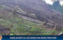 Nghệ An bắt tạm giam 3 chủ rừng có hành vi chặt phá trái phép