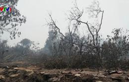 Cháy rừng lan rộng ở Malaysia
