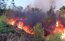 Đã khống chế được vụ cháy rừng tại Phú Yên