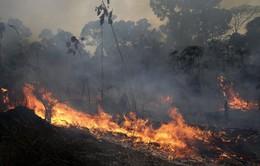 Brazil từ chối nhận viện trợ chữa cháy rừng của các nước G7