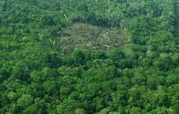 Chính sách khai thác rừng của Brazil hứng chịu sự chỉ trích