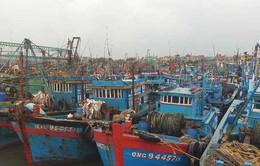 Huyện Diễn Châu (Nghệ An): Hơn 1.000 tàu thuyền đã về nơi neo đậu an toàn