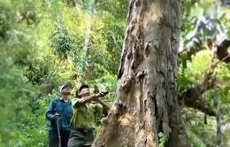 Quảng Nam: Lập chốt giữ rừng ngay trong rừng