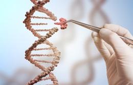 WHO tăng cường giám sát hoạt động nghiên cứu chỉnh sửa gen người