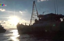 Lực lượng kiểm ngư tăng cường hỗ trợ ngư dân