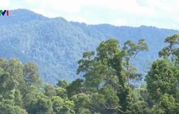 Khôi phục thành công rừng giống quý bản địa