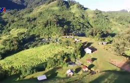 Khám phá rừng sâm Ngọc Linh
