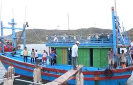Phú Yên: Gần 200 tàu câu cá ngừ đại dương nằm bờ