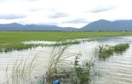 Thiệt hại do mưa lũ ở Bình Thuận