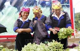 Tết Độc lập của người Mông