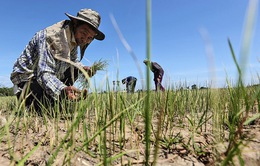 Thái Lan đối mặt với mùa khô kỷ lục
