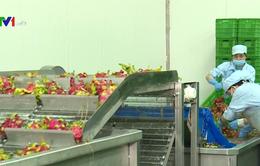 Thúc đẩy truy xuất nguồn gốc nông sản, đáp ứng yêu cầu xuất khẩu sang Trung Quốc