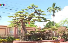 Nghề trồng cây cảnh tại Hải Lý (Nam Định) góp phần thay đổi cuộc sống người dân