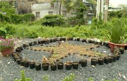 Xóa bãi rác làm vườn hoa