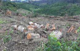 Lâm Đồng phát hiện vụ phá hơn 2ha rừng ở Đạ K'Nàng