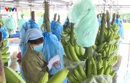 Giải pháp xuất khẩu nông, thủy sản bền vững sang thị trường Trung Quốc