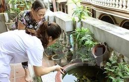 TP.HCM: Triển khai 3 chiến dịch chống sốt xuất huyết