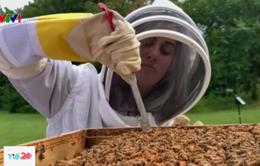 Người Anh giảm căng thẳng bằng phương pháp nuôi ong
