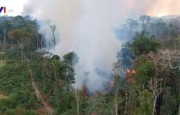 Hợp tác Mỹ - Brazil về bảo tồn rừng Amazon