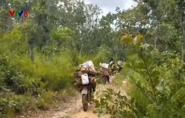 Tan hoang rừng phòng hộ Chư Mố, Gia Lai