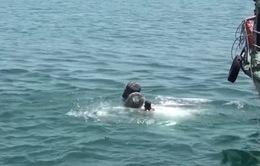 Tìm thấy thi thể nạn nhân vụ chìm tàu cá tại Quảng Bình
