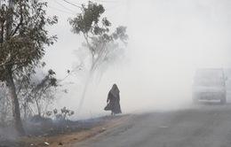 Indonesia đóng cửa các lâm trường để hạn chế cháy rừng