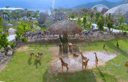 Chiêm ngưỡng các loài vật hoang dã tại vườn thú mở đầu tiên ở Nha Trang