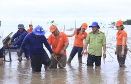 2.000 cây bần được ươm mầm tại rừng ngập mặn Sóc Trăng