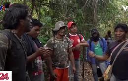 """Những """"vệ binh"""" rừng già quyết chiến với lâm tặc phá rừng Amazon"""