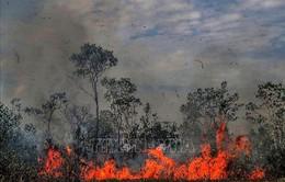 Brazil bắt giữ 63 đối tượng liên quan các vụ cháy rừng Amazon