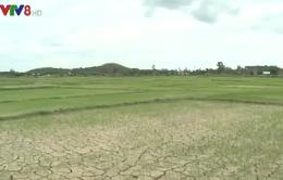 Gia Lai nhiều địa phương bị hạn nặng giữa mùa mưa