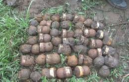 Quảng Trị: Phát hiện gần 300 quả bom bi và đầu đạn