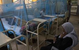 Bùng phát dịch sốt xuất huyết tại Pakistan, 20 người thiệt mạng
