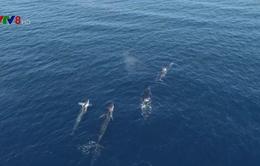 """Nhiều loài sinh vật biển bất đắc dĩ """"di cư"""""""